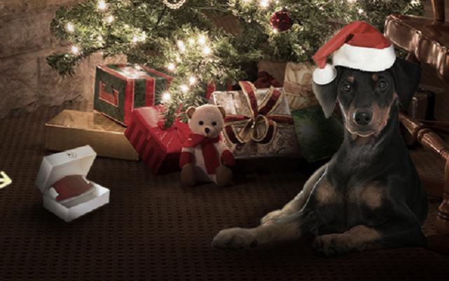 Meetpet ofrece novedades tecnologicas para sus mascotas - Novedades para mascotas ...